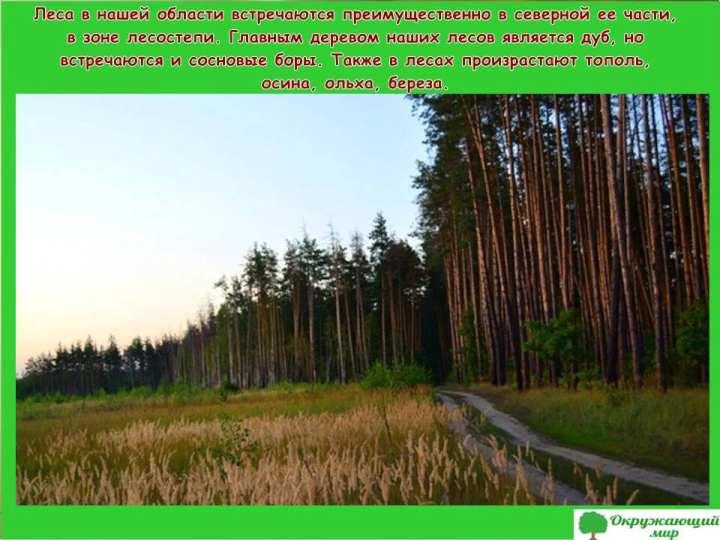 Леса Воронежской области