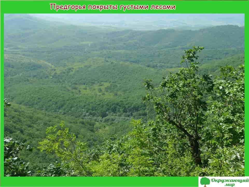 Предгорья Дагестана