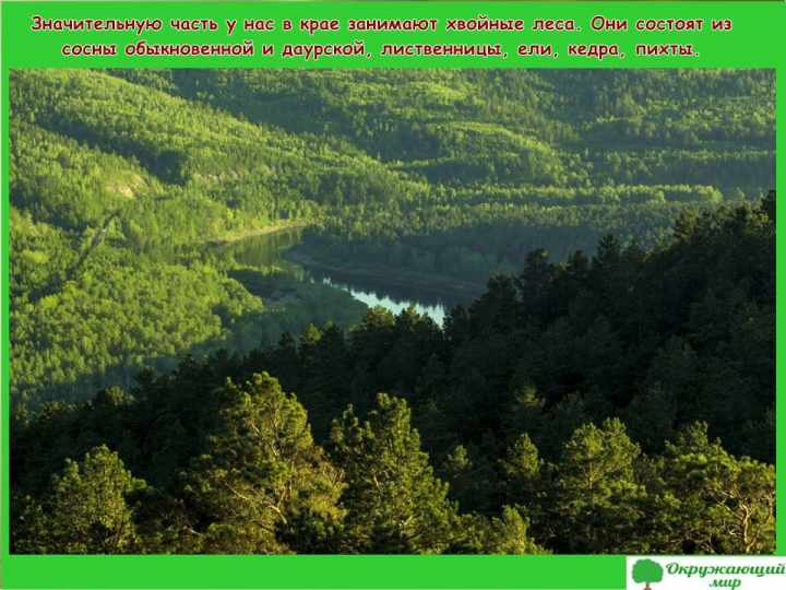 Леса Забайкальского края