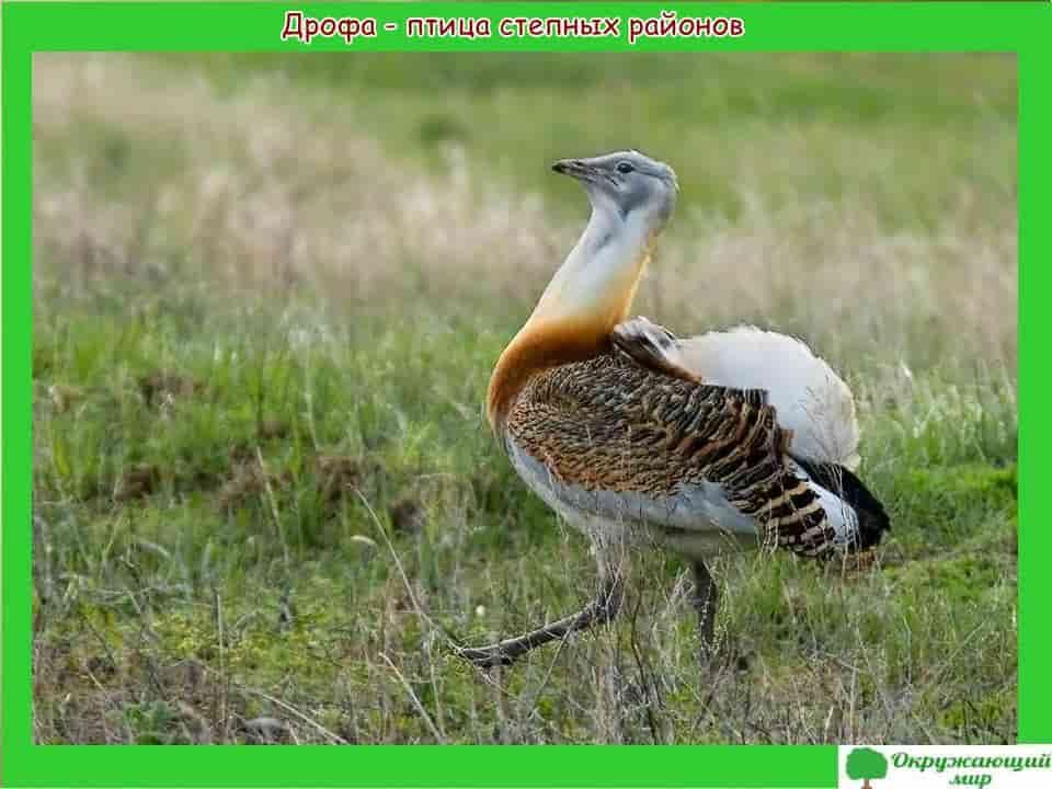 Птицы Дагестана