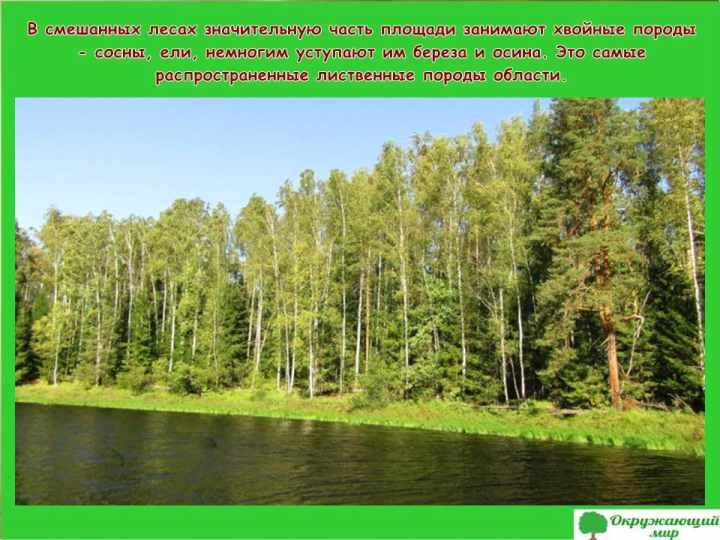 Окружающий мир 3 класс 1 часть Проект Разнообразие природы родного края - Владимирская область 5