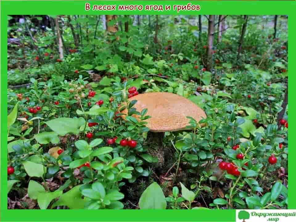 Ягоды и грибы Московской области
