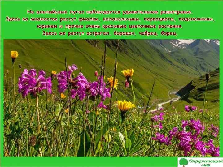 Альпийские луга Ингушетии