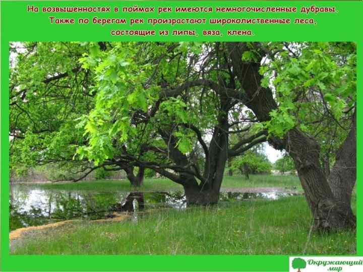 Дубравы Волгоградской области