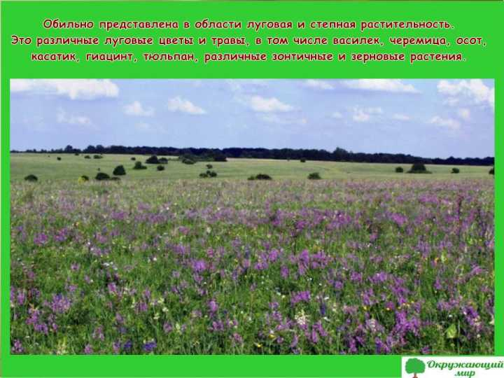Луга и степи Белгородской области