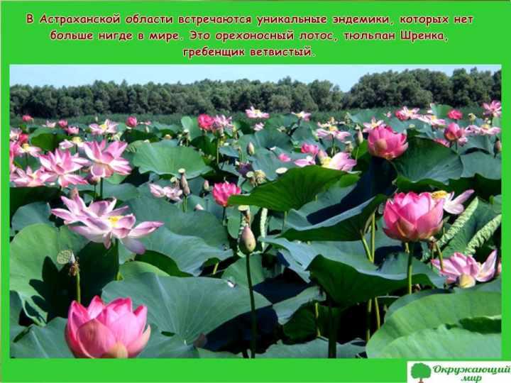 Растения Астраханской области