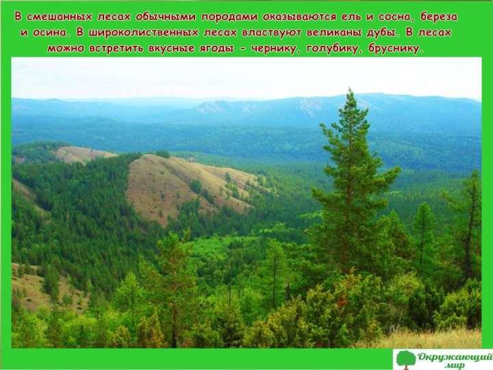 Смешанные леса Башкортстана