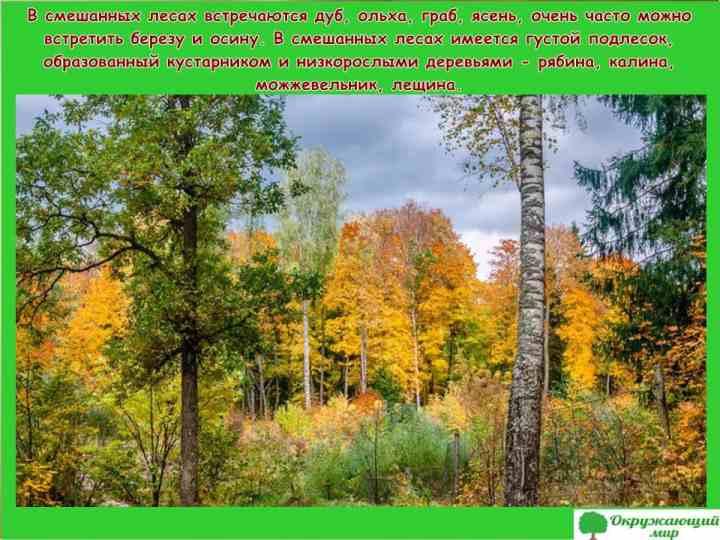 Смешанные леса Брянской области