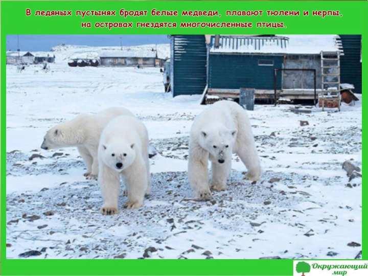 Животные Архангельской области