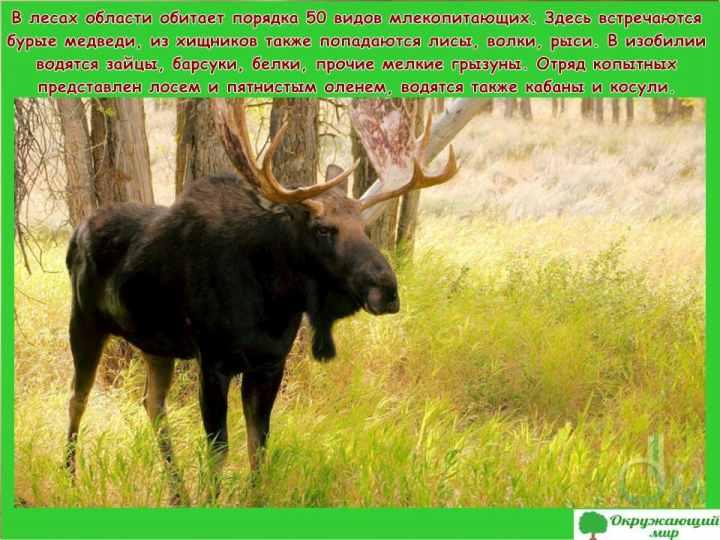 Окружающий мир 3 класс 1 часть Проект Разнообразие природы родного края - Владимирская область 7
