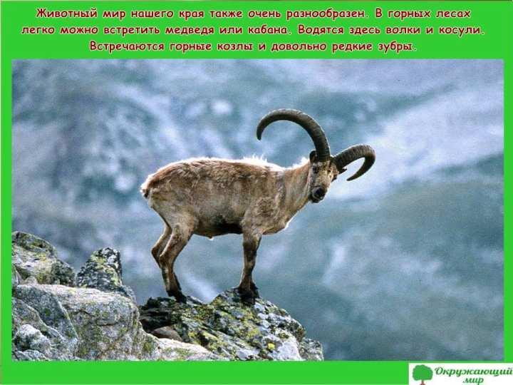Животный мир Ингушетии