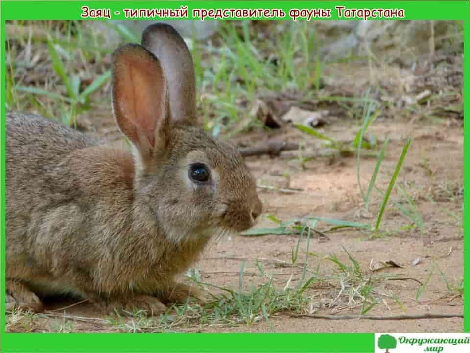 Животный мир Татарстана