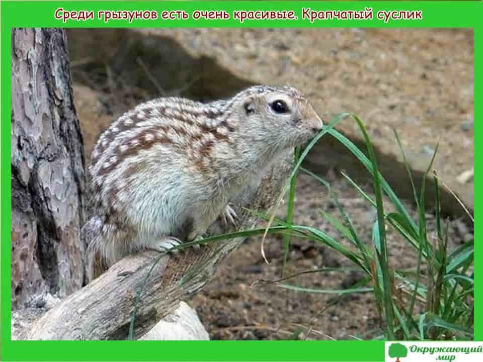 Грызуны Татарстана