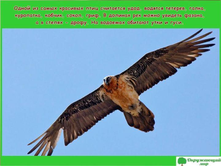 Птицы Ингушетии