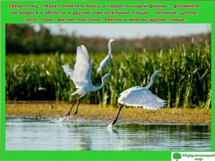 Птицы в Астраханской области