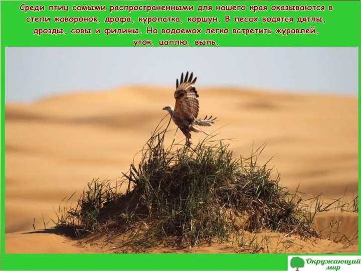 Птицы Волгоградской области