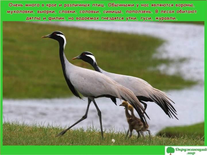 Птицы Забайкальского края