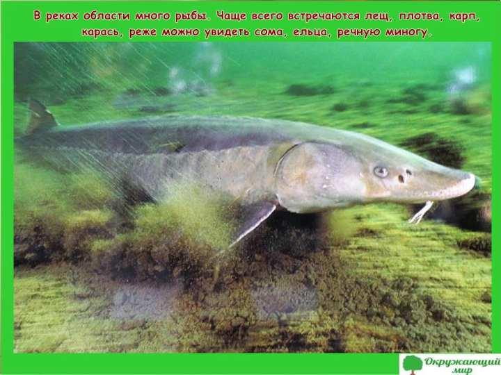 Рыбы Белгородской области