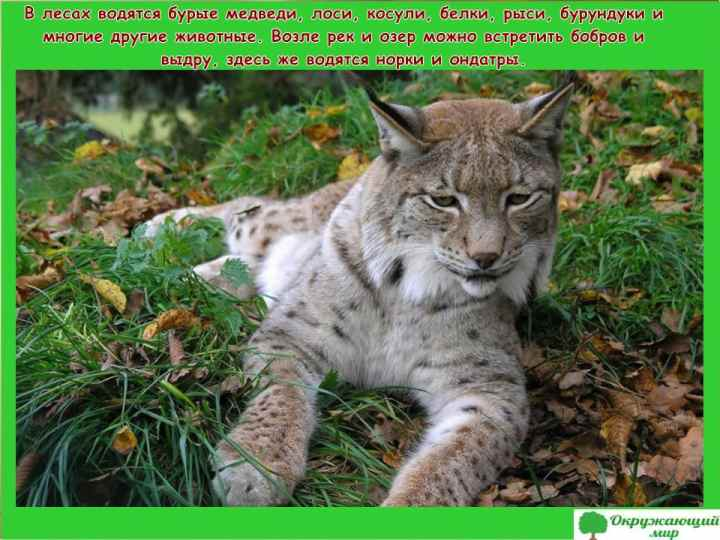 Животный мир Башкортстана