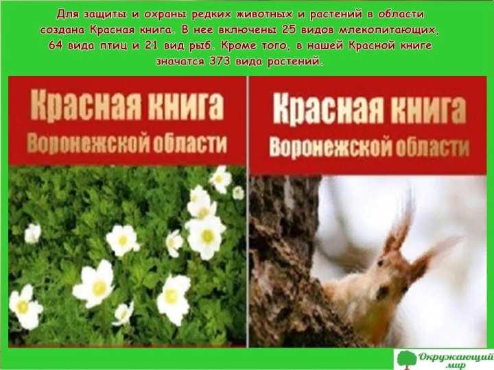 Красная книга Воронежской области