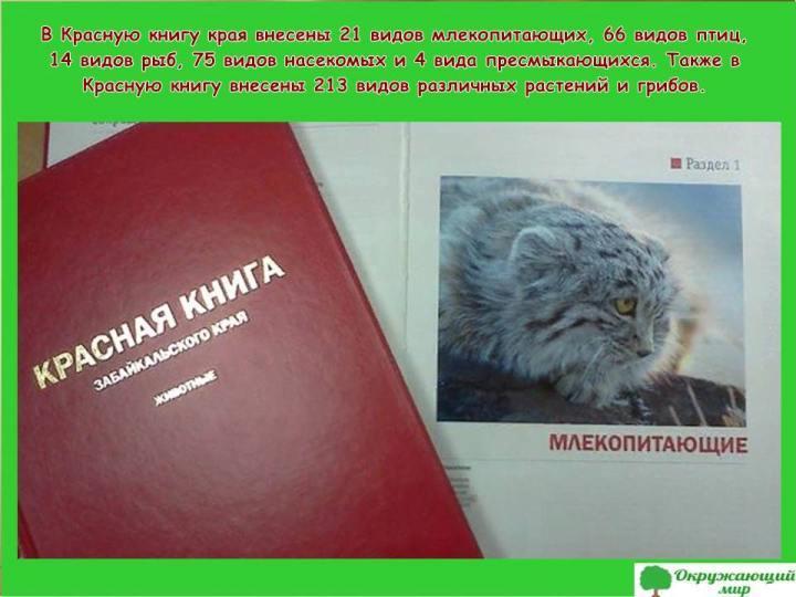 Красная книга Забайкальского края