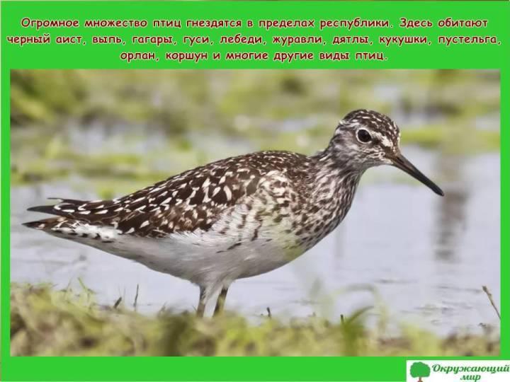 Птицы Башкортстана