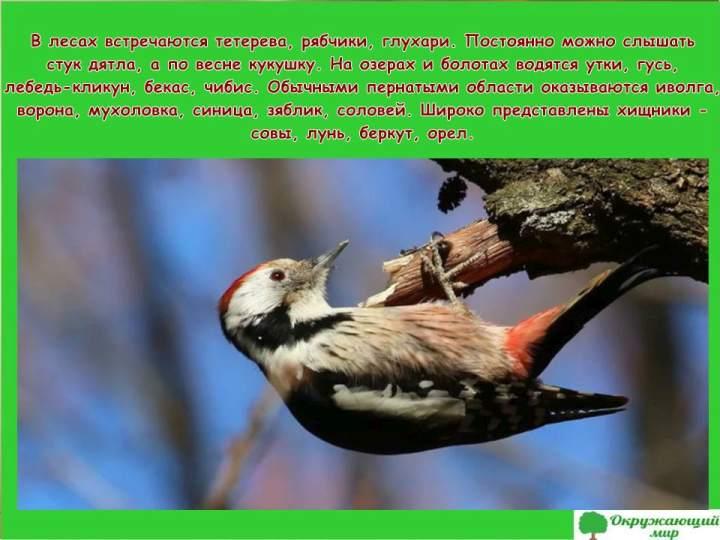 Птицы Брянской области