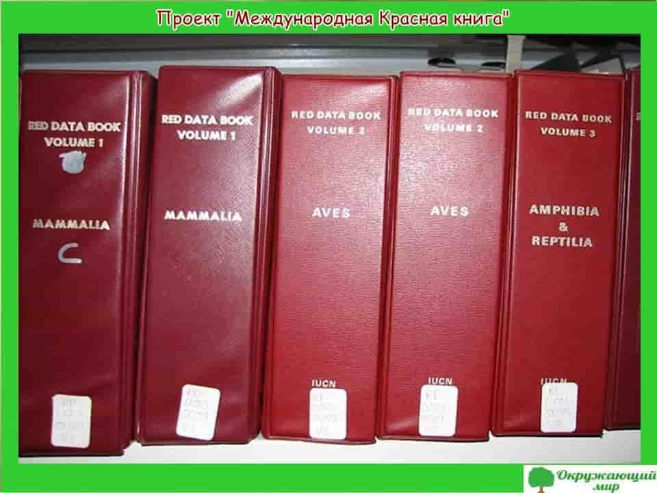 Проект Международная красная книга