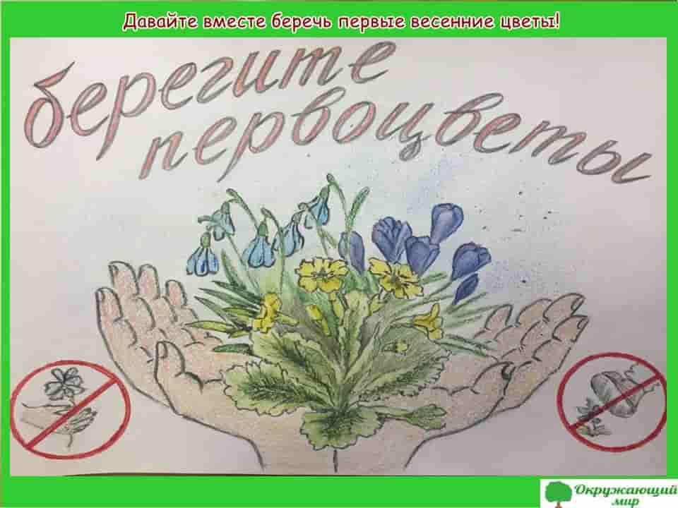 Берегите весенние цветы