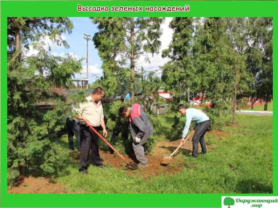 Высадка зеленых насаждений