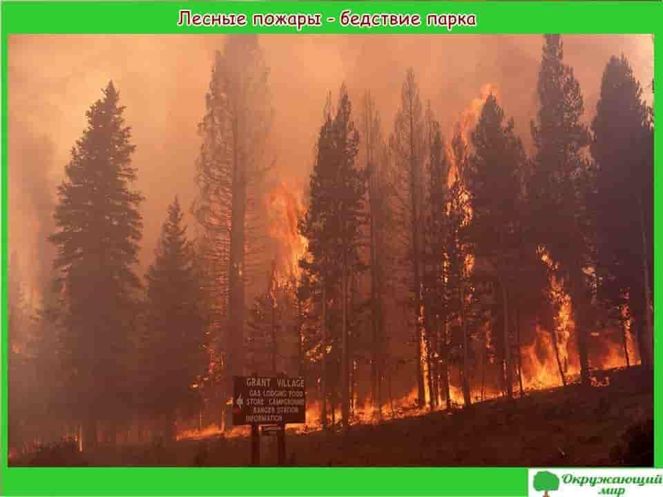 Лесные пожары - бедствие парка
