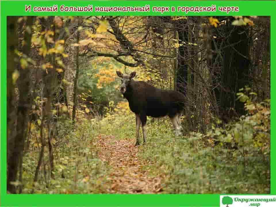 Самый большой национальный парк в городской черте