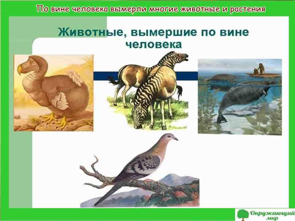 По вине человека вымерли многие животные и растения
