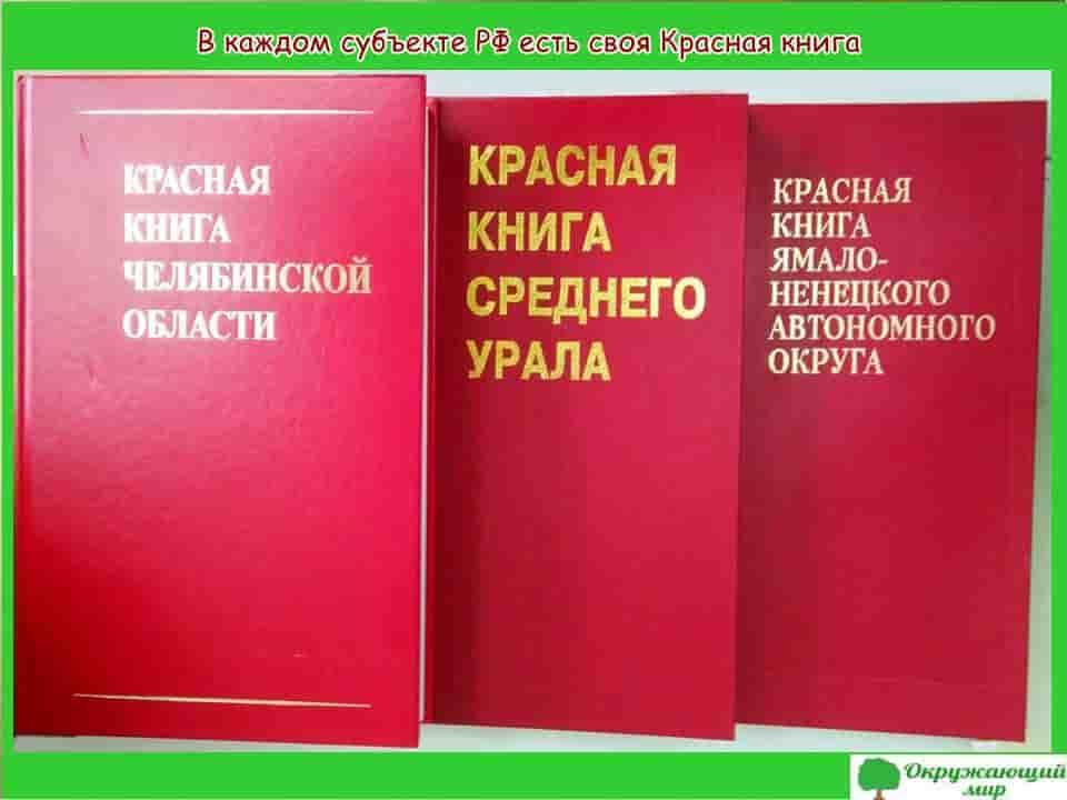 В каждом субъекте РФ есть своя Красная книга