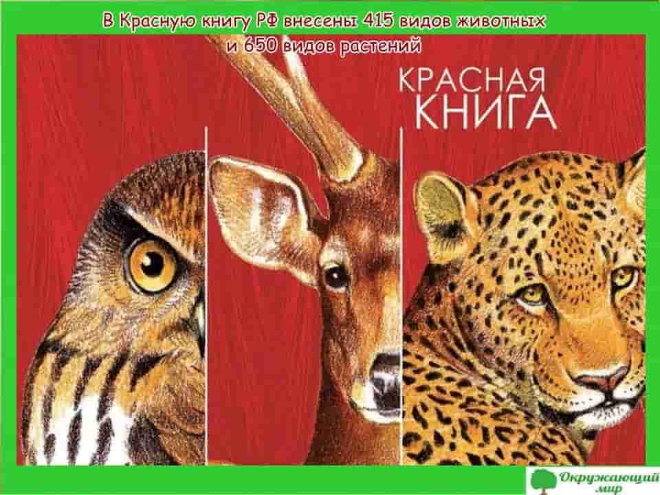 415 видов животных и 650 видов растений