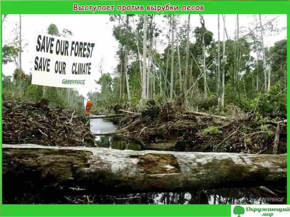 Выступает против вырубки лесов