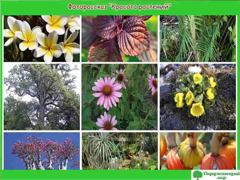 Фоторассказ Красота растений, какие бывают растения