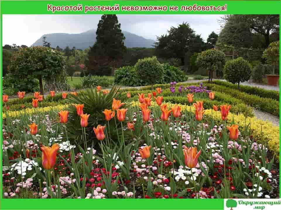 Красотой растений невозможно не любоваться