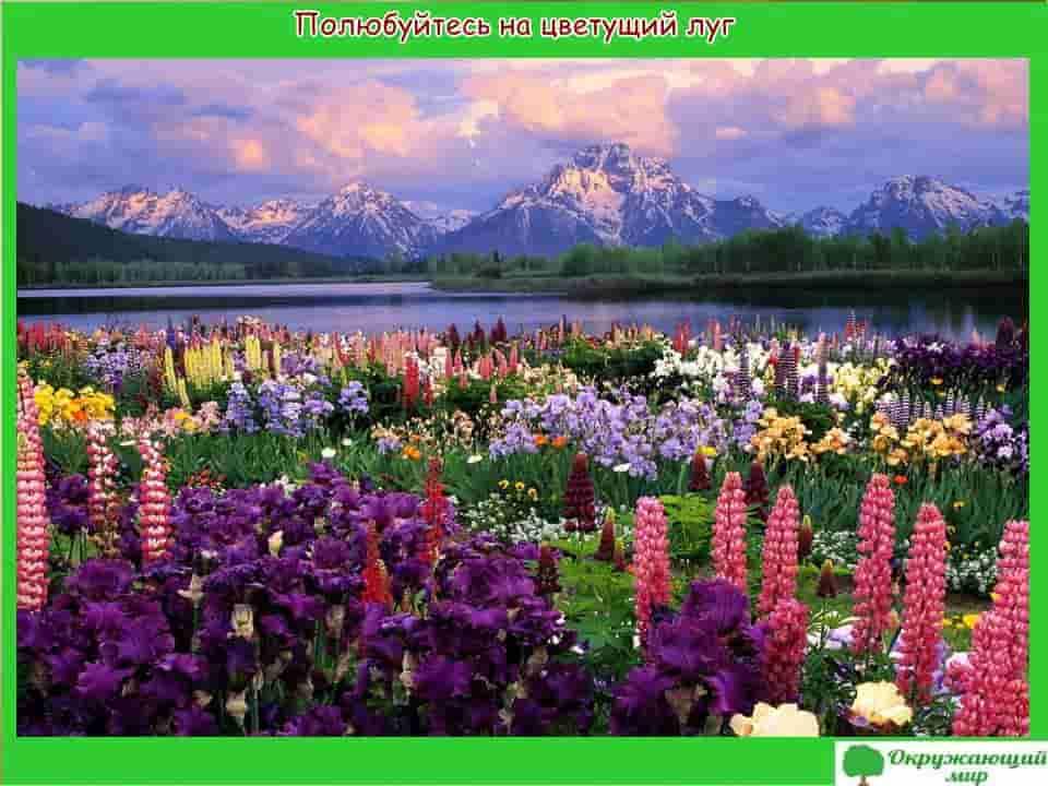 Полюбуйтесь на цветущий луг