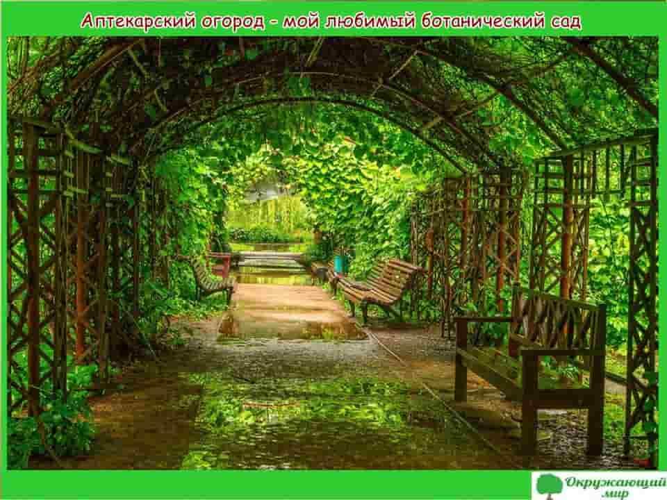Аптекарский огород-мой любимый ботанический сад