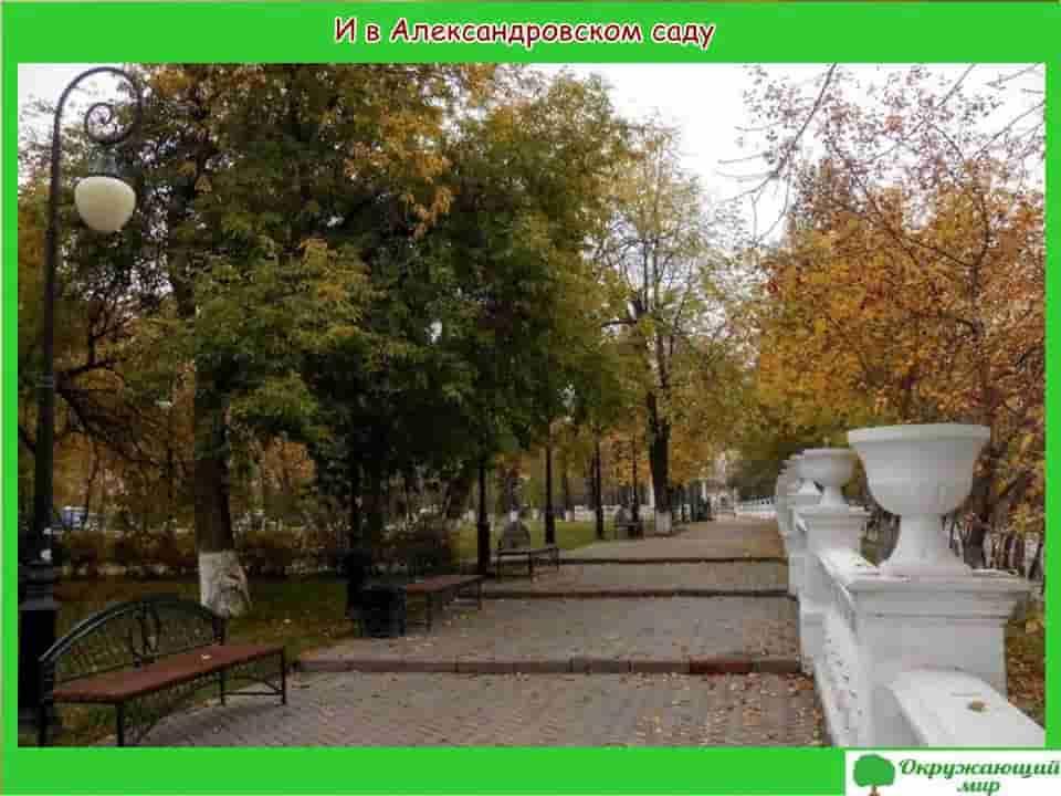 Александровский сад Тюмени