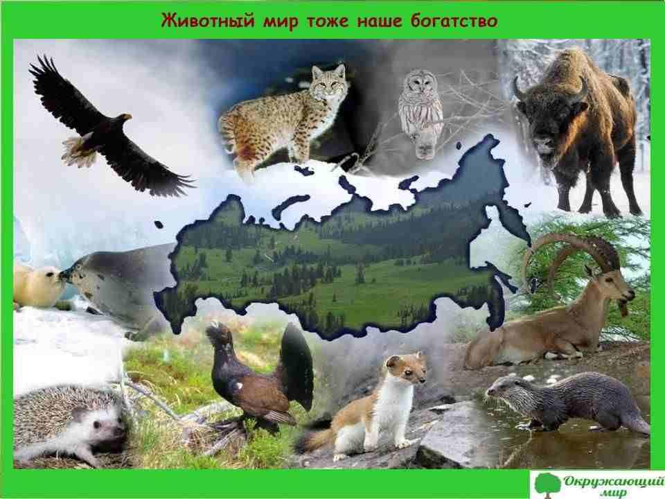 Животный мир тоже богатство