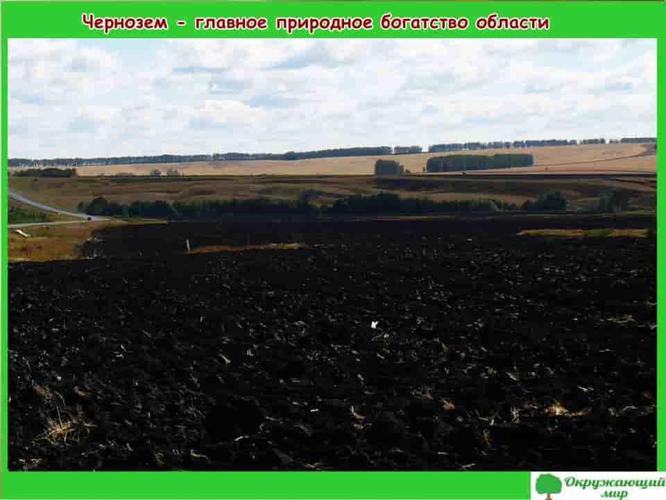 Чернозем - главное природное богатство Воронежской области