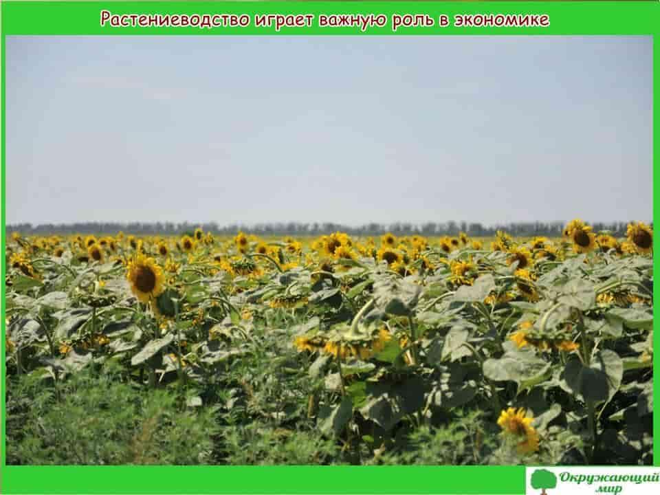 Растениеводство Адыгеи