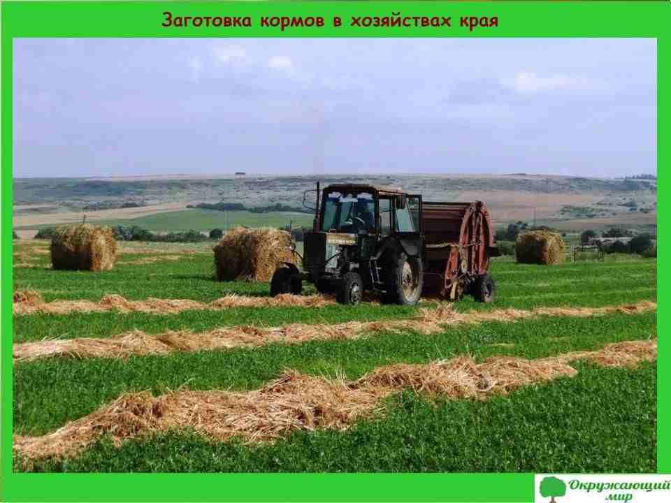 "Проект ""Экономика родного края. Хабаровский край"""