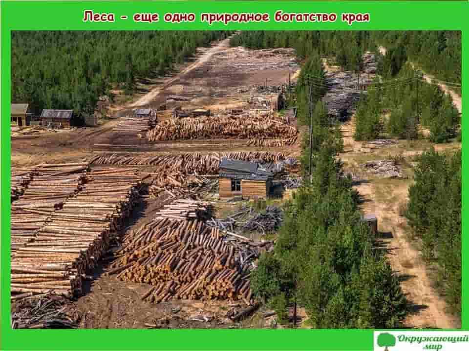 Леса богатство Забайкальского края