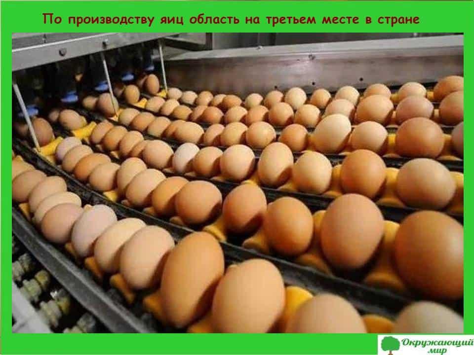 Производство яиц в Ярославской области