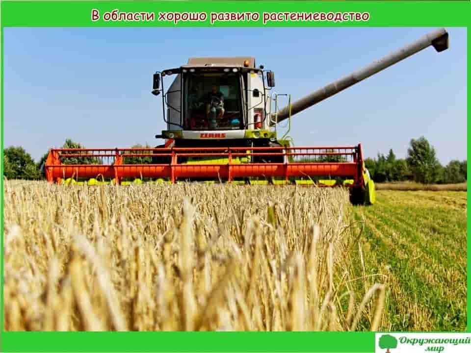Растениеводство Брянской области