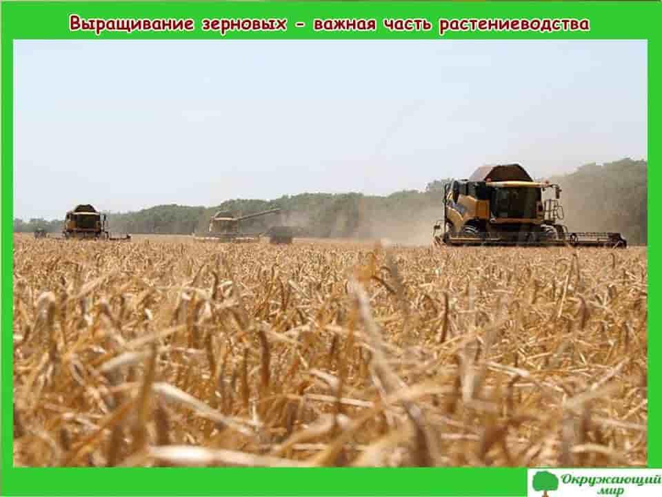 Растениеводство Владимирской области