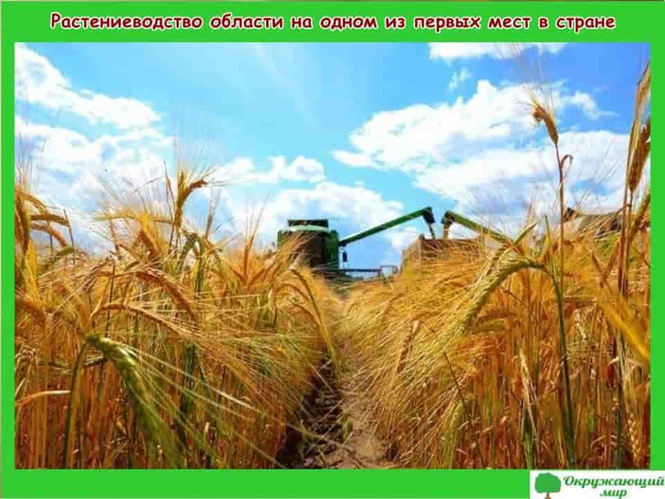 Растениеводство области на одном из первых мест в стране